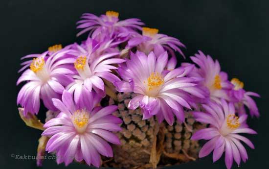 Licht Und Sukkulente Pflanzen Kaktusnews