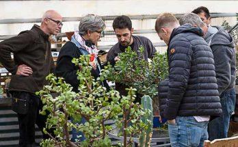 Hessentipp beim Kaktusmichel, dass Team bei der Arbeit