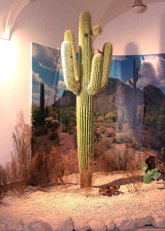 Saguaro in der Ausstellung in Wiesbaden©Paulduro