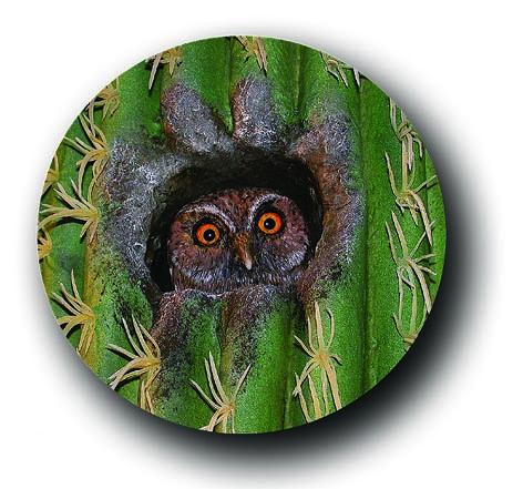 Im Kaktus wohnt auch ein kleiner Repro-Kauz©Paulduro