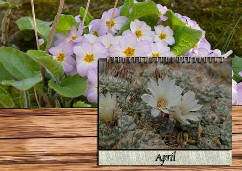 Pflege April