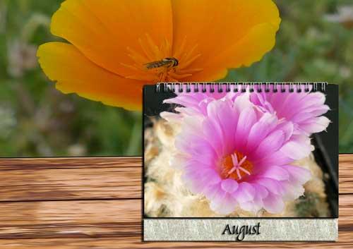 Pflege August