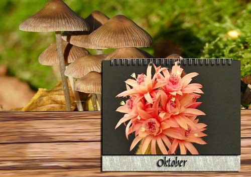 Pflege Oktober