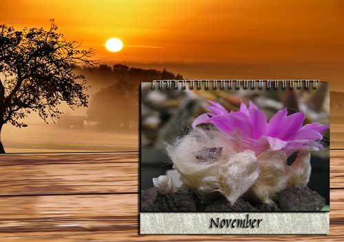 Pflege November