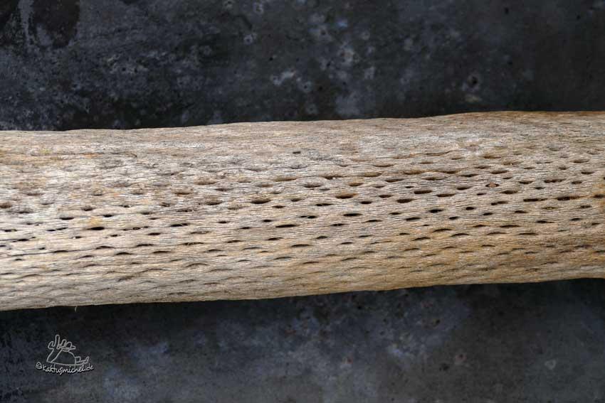 Kakteenholz entstanden auf dem heimischen Komposthaufen©Kaktusmichel.de